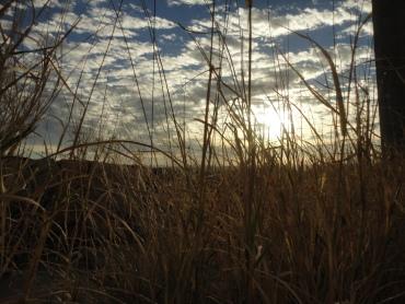 Entre la hierba
